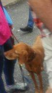 Sweet dog Toronto Ontario